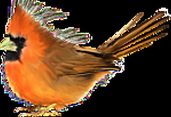 tubes_oiseaux_tiram_68