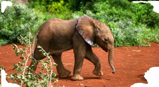 tubes_elephants_tiram_612