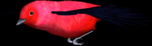 tubes_oiseaux_tiram_203