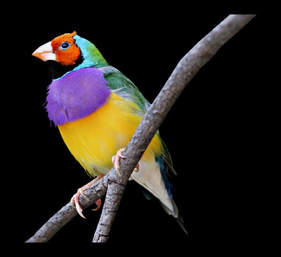 tubes_oiseaux_tiram_140