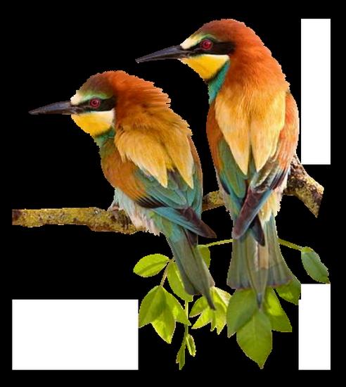 tubes_oiseaux_tiram_177