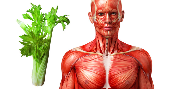 هل تعلم ماذا سيحدث لجسمك إذا كنت تأكل الكرفس لمدة أسبوع