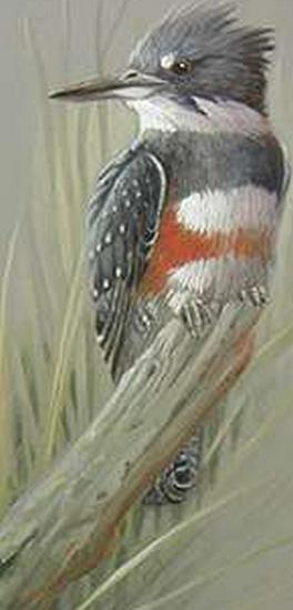 tubes_oiseaux_tiram_229