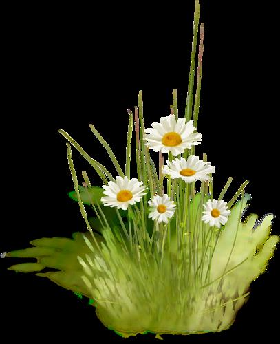 tubes_fleurs_tiram_550