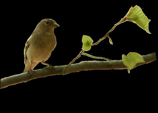 tubes_oiseaux_tiram_89