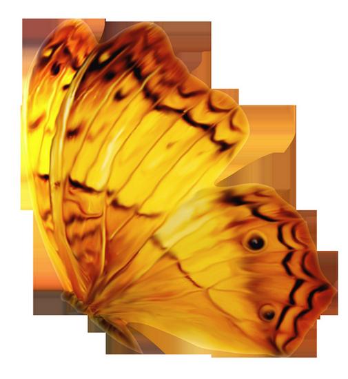tubes_papillon_tiram_79