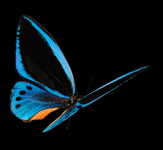tubes_papillon_tiram_789