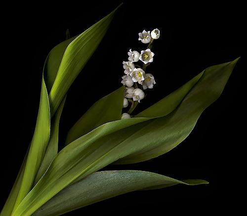 tubes_fleurs_tiram_630