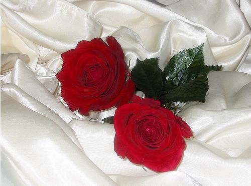 tubes_fleurs_tiram_649