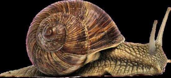 tubes_escargots_tiram_60