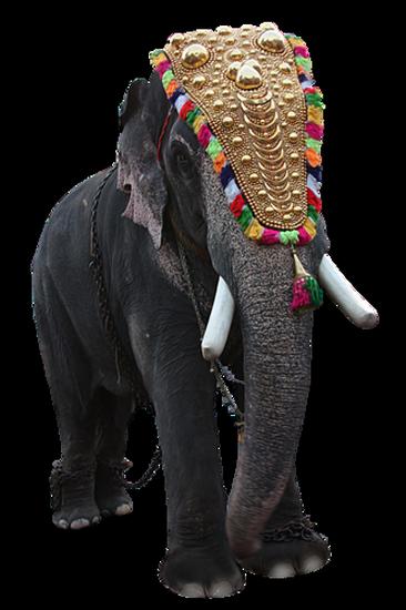 tubes_elephants_tiram_513