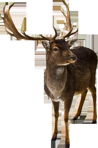 animaux-noel-tiram-628