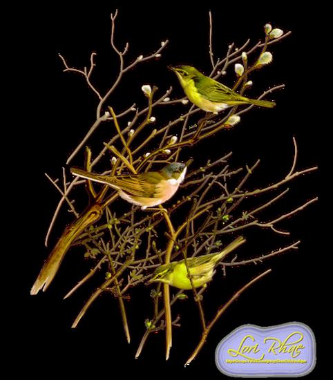 tubes_oiseaux_tiram_134