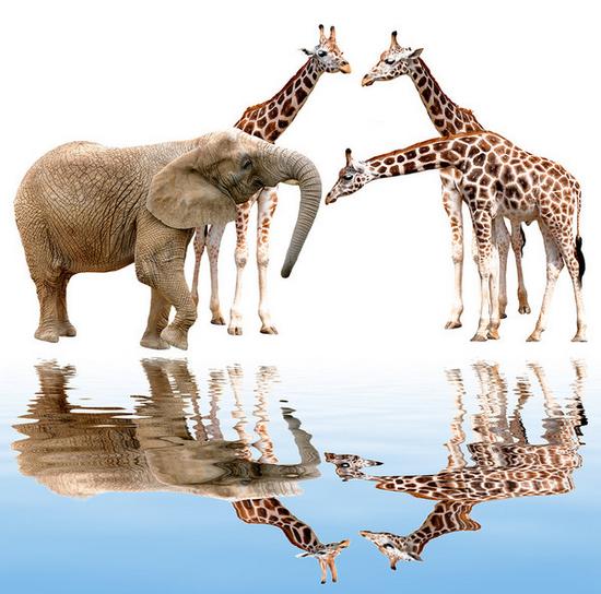 tubes_elephants_tiram_9