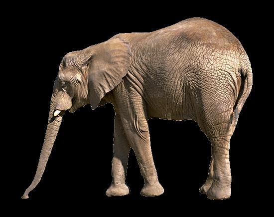 tubes_elephants_tiram_566