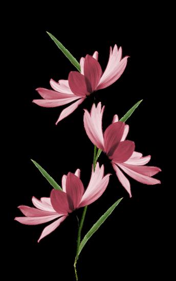 tubes_fleurs_tiram_474