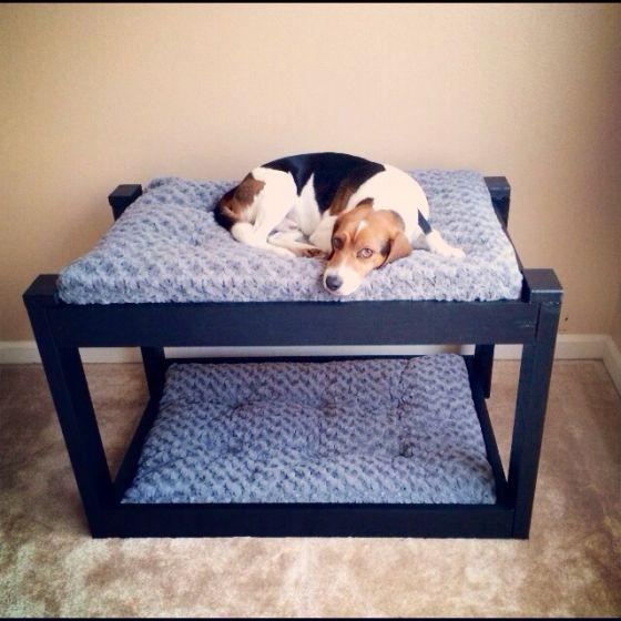 El correcto descanso es una de las necesidades de un perro