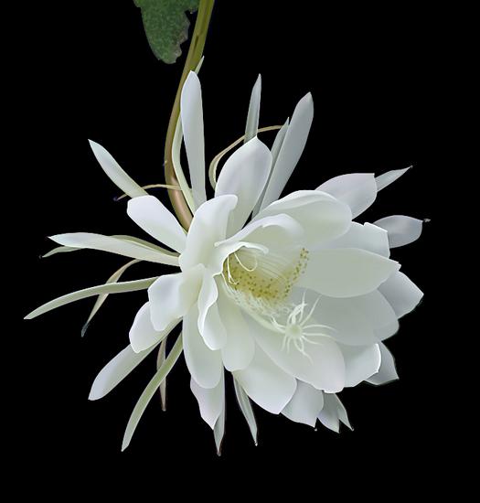 tubes_fleurs_tiram_508