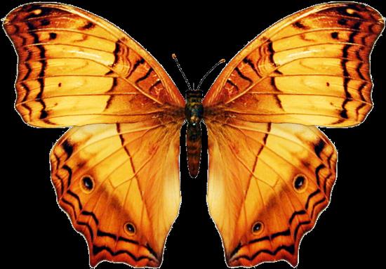 tubes_papillon_tiram_16