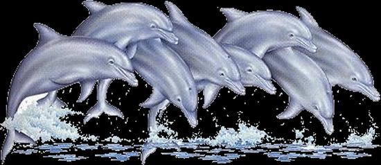 tubes_dauphins_tiram_132