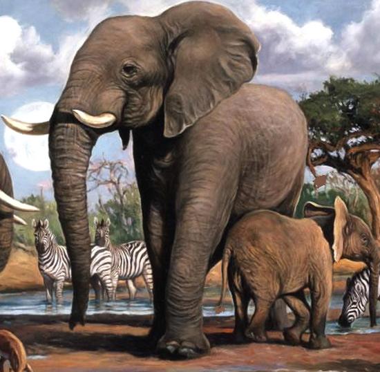 tubes_elephants_tiram_96