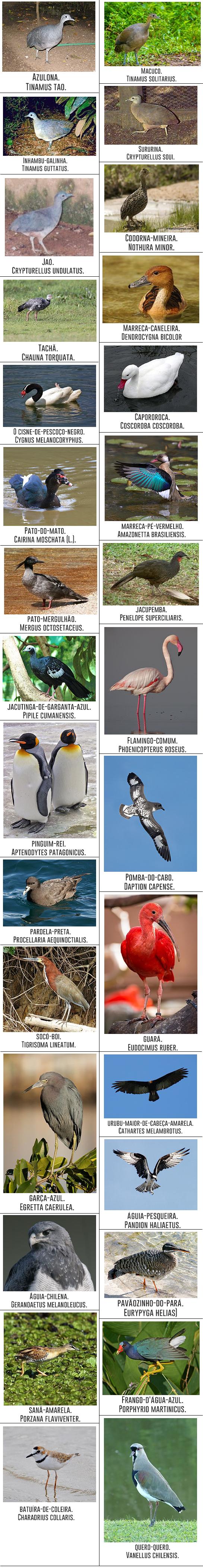 30-imagens-de-aves