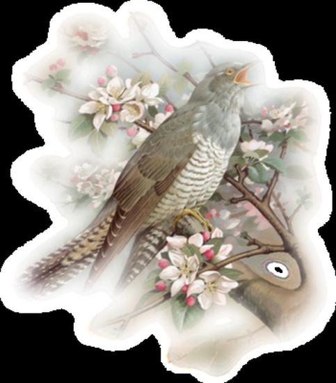 tubes_oiseaux_tiram_221