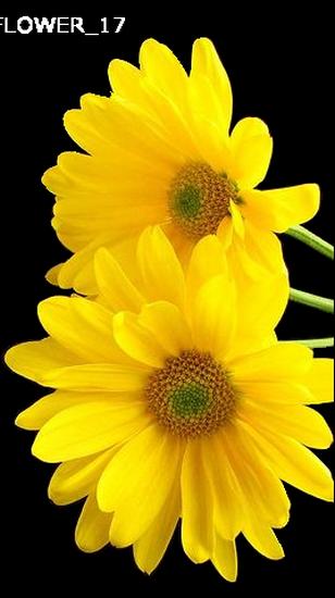 tubes_fleurs_tiram_287