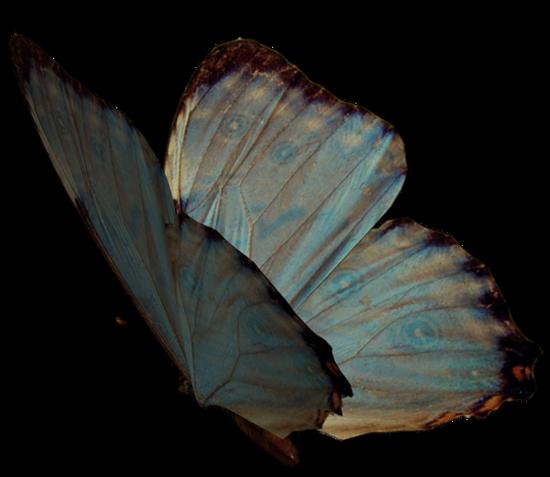 tubes_papillon_tiram_506