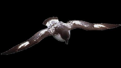 tubes_oiseaux_tiram_151