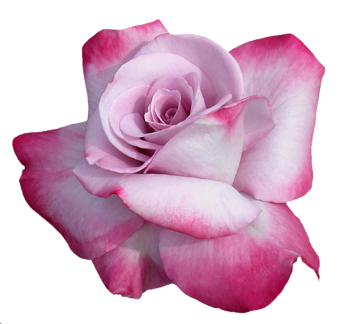 tubes_fleurs_tiram_761