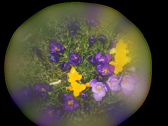 tubes_fleurs_tiram_301