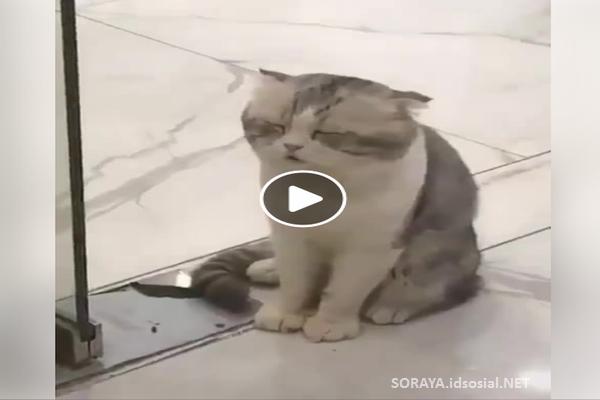 https://image.ibb.co/eMCW3U/foto_kucing_malas_lucu_di_hari_senin.png