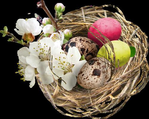 fleurs_paques_tiram_136