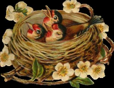 tubes_oiseaux_tiram_231