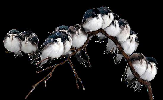 tubes_oiseaux_tiram_170