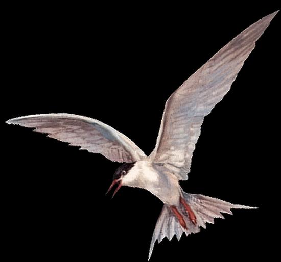 tubes_oiseaux_tiram_198