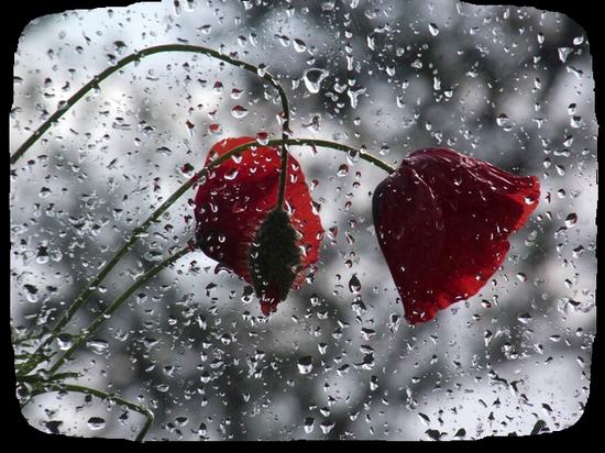 tubes_fleurs_tiram_143