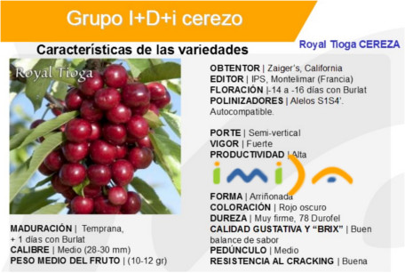 Ficha cereza Royal Tioga