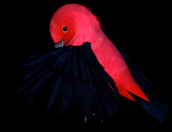 tubes_oiseaux_tiram_209