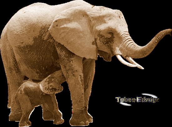 tubes_elephants_tiram_40
