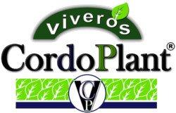 Viveros CordoPlant, viveros de olivos Córdoba, Jaén