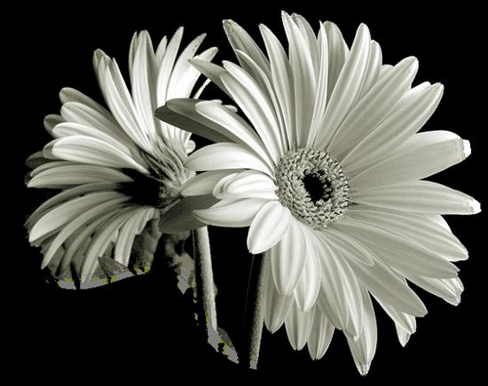 tubes_fleurs_tiram_310