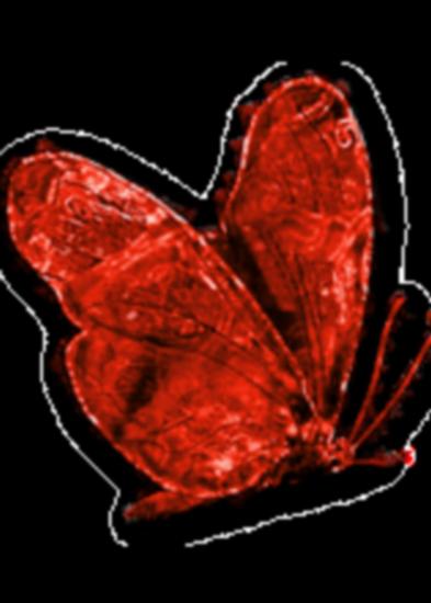 tubes_papillon_tiram_470