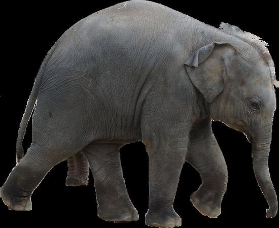 tubes_elephants_tiram_108