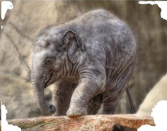 tubes_elephants_tiram_613