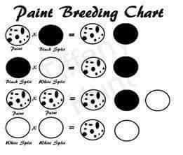 https://image.ibb.co/eXGOhv/Paint_Colour_Chart.jpg