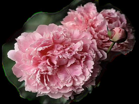 tubes_fleurs_tiram_200