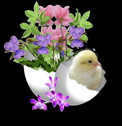 fleurs_paques_tiram_23