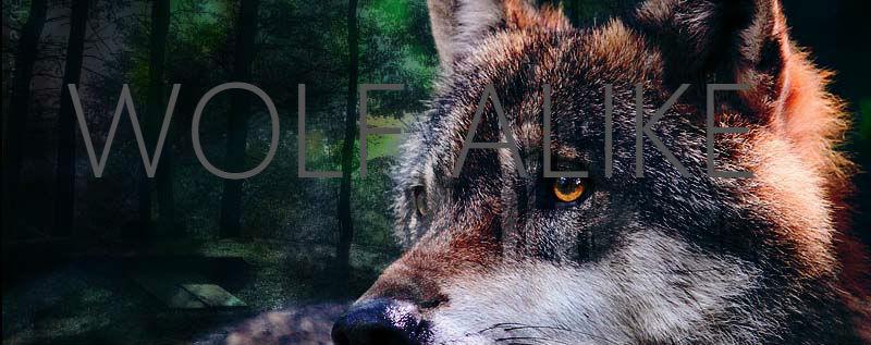 Wolf Alike